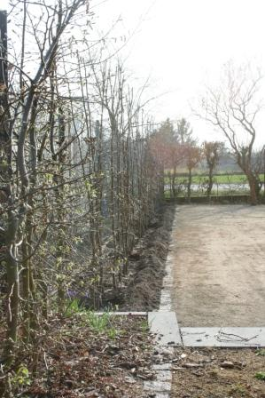"Bild ""Tagebuch 12-03-23 Heckenpflanzung.jpg"""